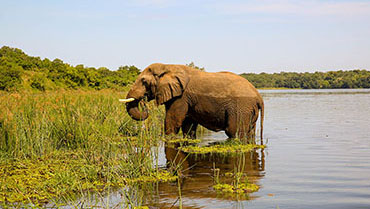 3 Day Murchison Falls Safari