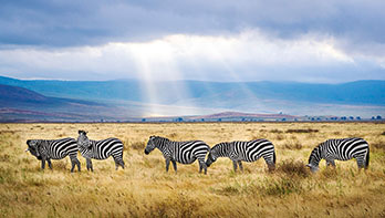 4 Day Serengeti Ngorogoro Safari