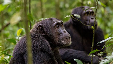 7 Day Primate Safari